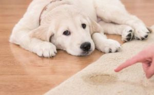Nantwich carpet stain removal